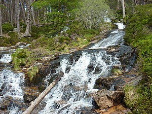 Waterfall in Caledonian Forest1
